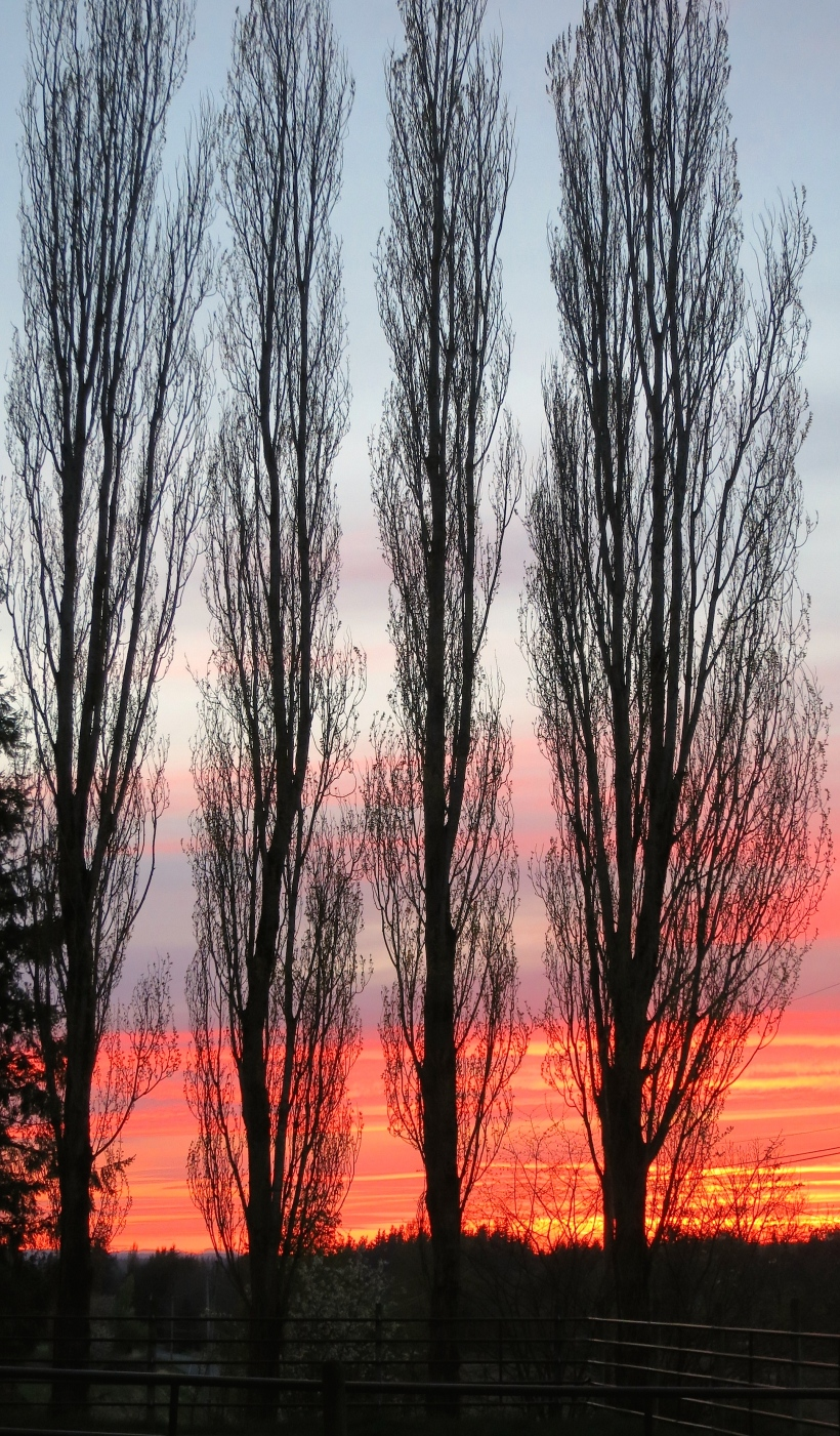 sunset414141