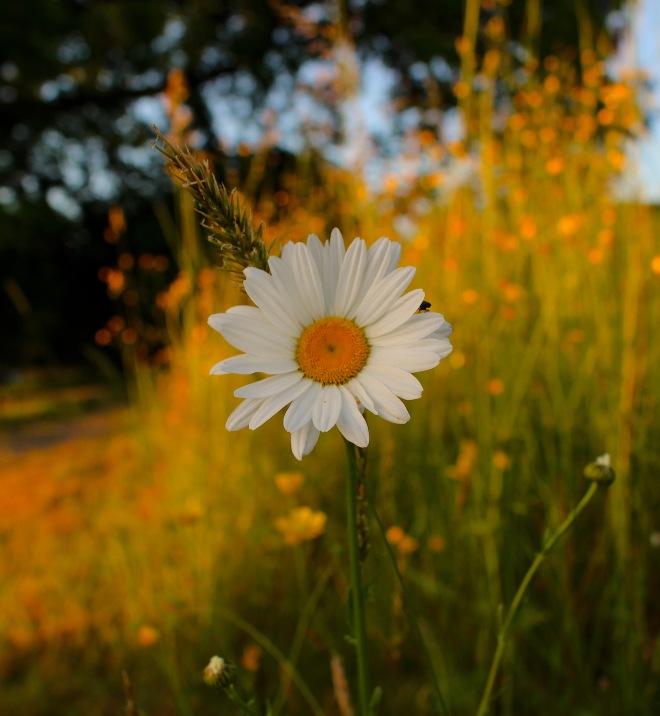 daisy6153