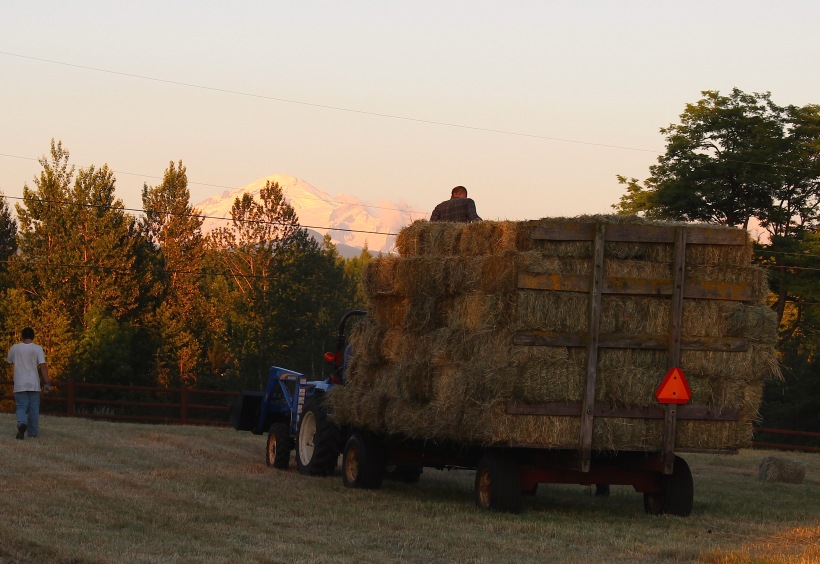 hay for the horses by gary snyder He had driven half the night from far down san joaquin through mariposa, up the dangerous mountain roads, and pulled in at eight am with his big truckload of hay behind the barn.