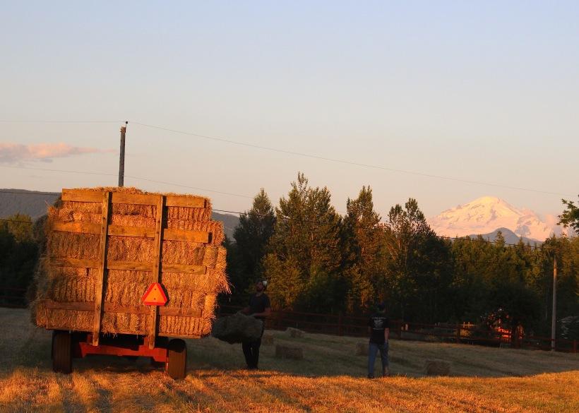 haymaking5