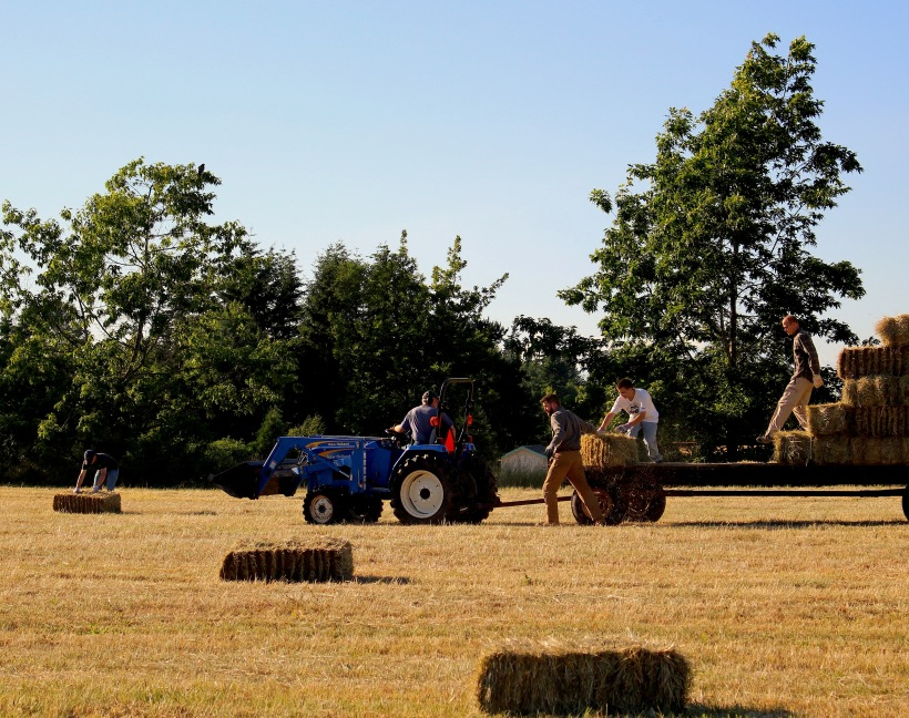 haymaking6