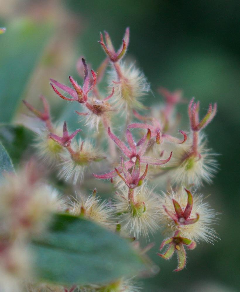 seedpods2
