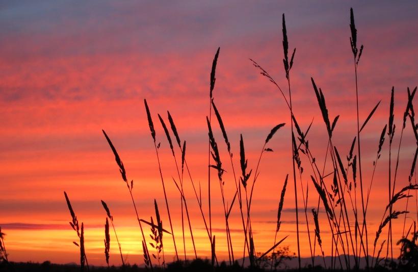 sunset61715