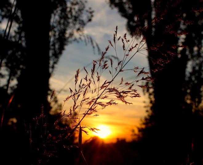 sunset714153