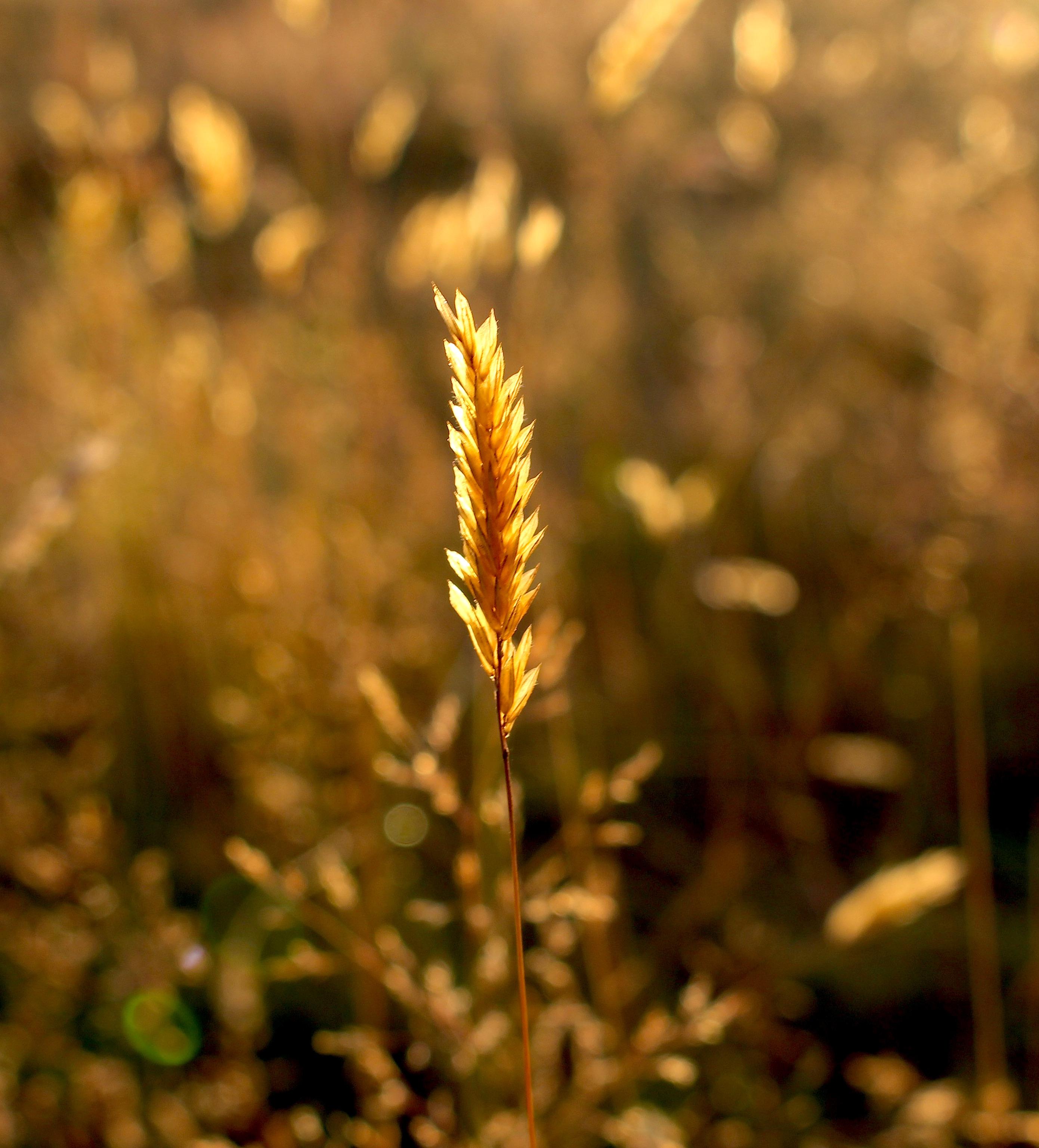 grass71615