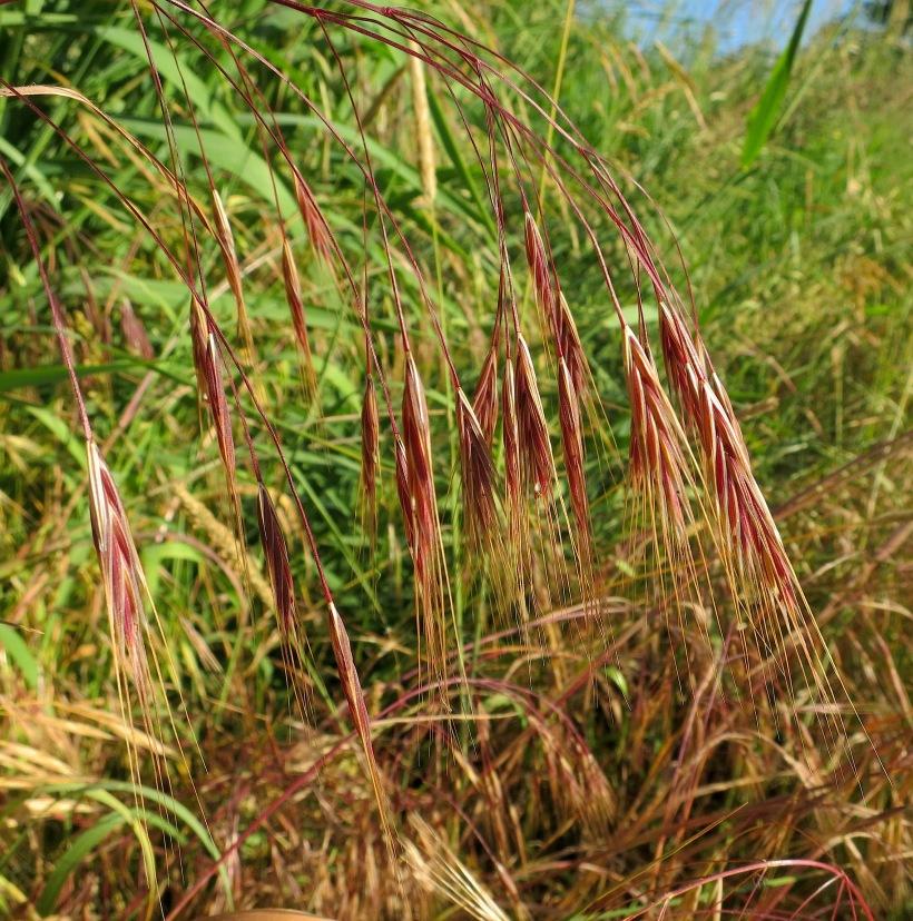 grassmorning15
