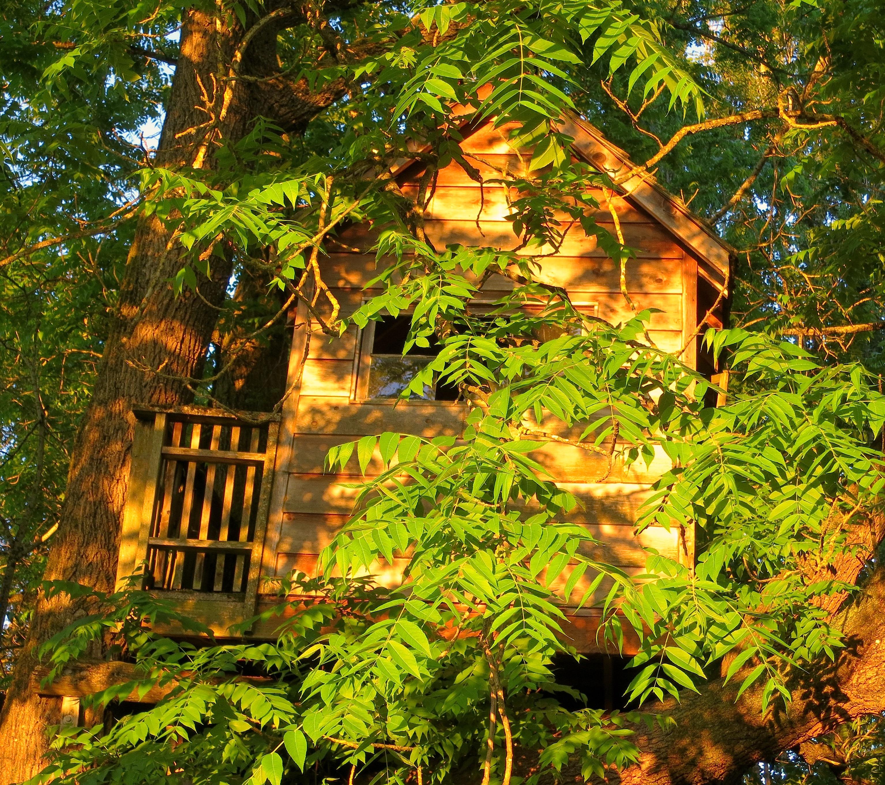 treehousesunset