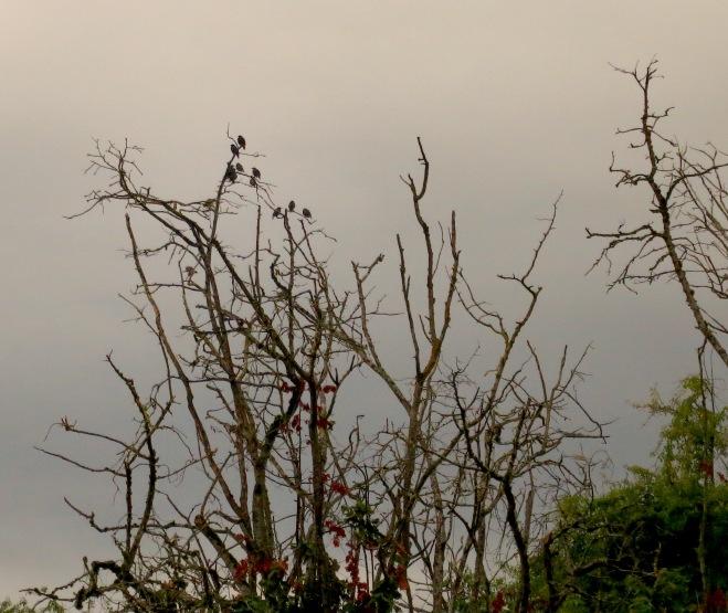 birdsfilbertrain