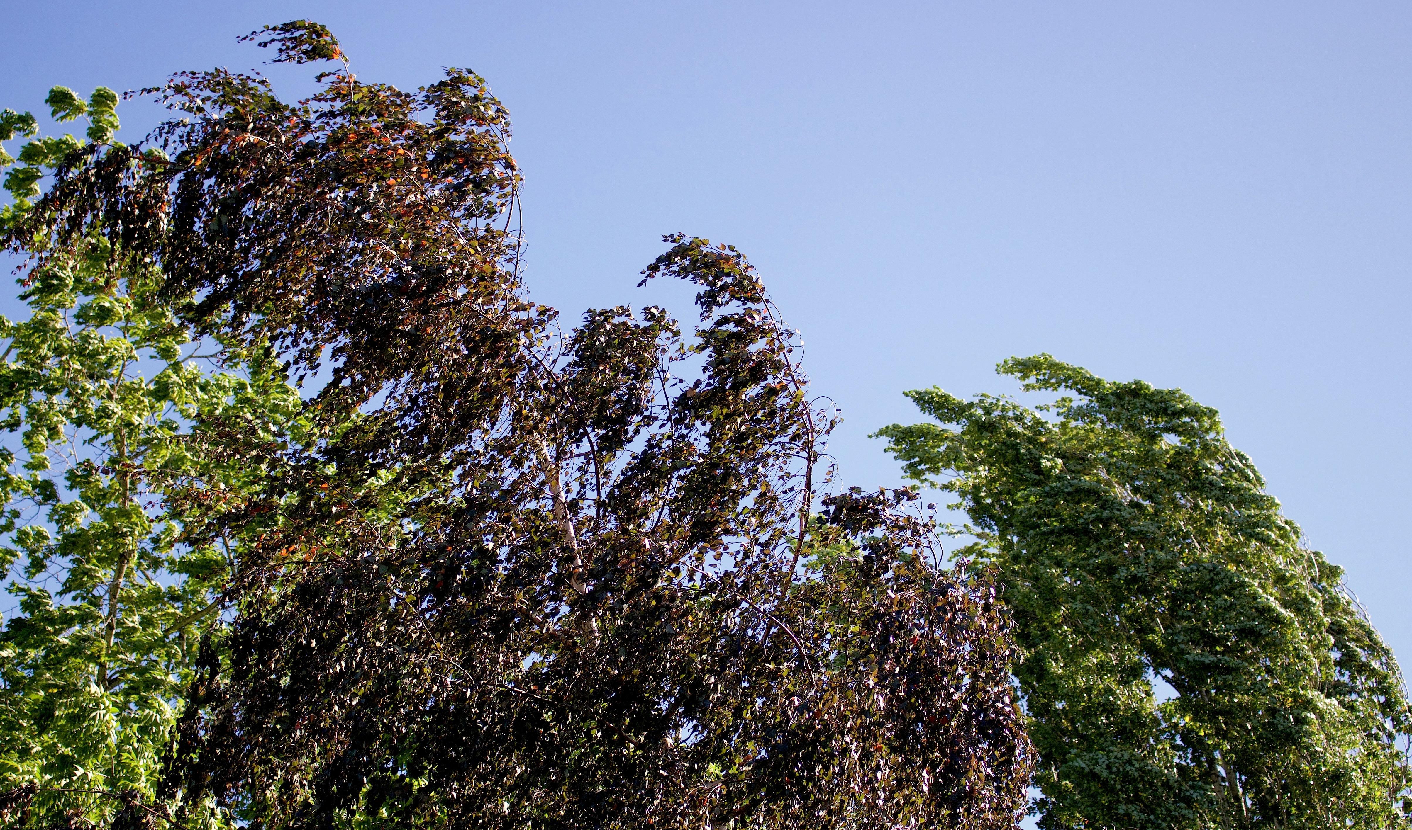 breezetrees