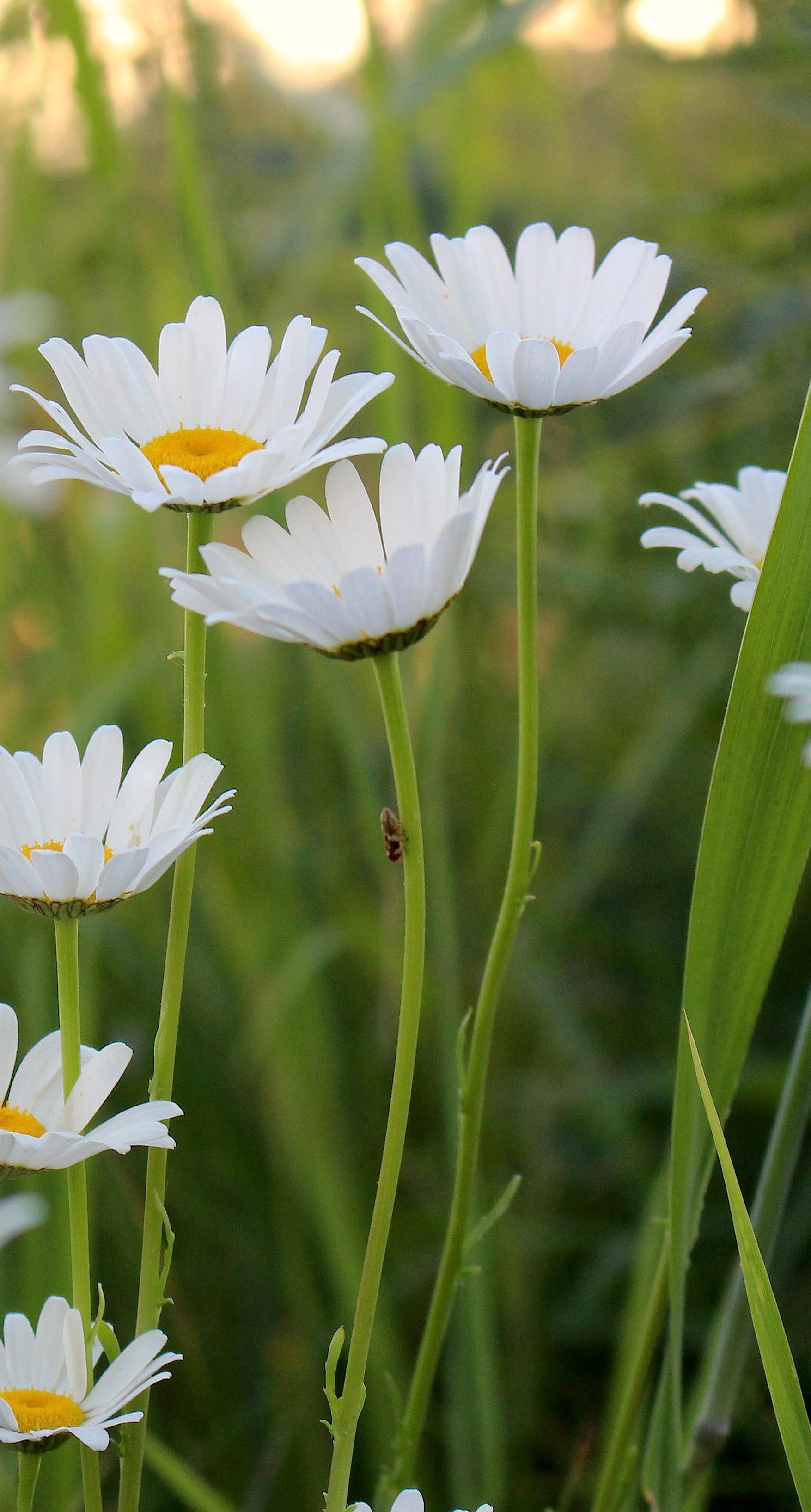 daisy6152