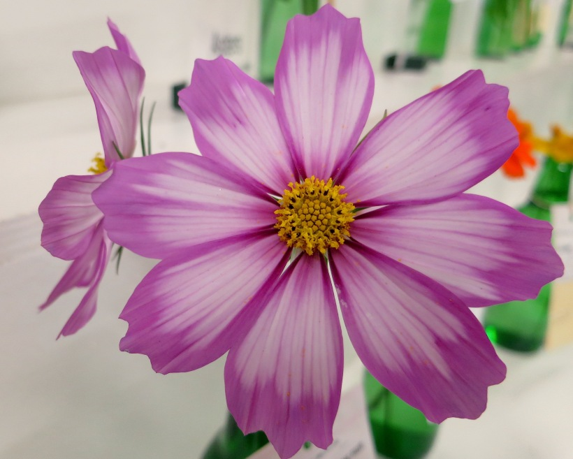fairflower1