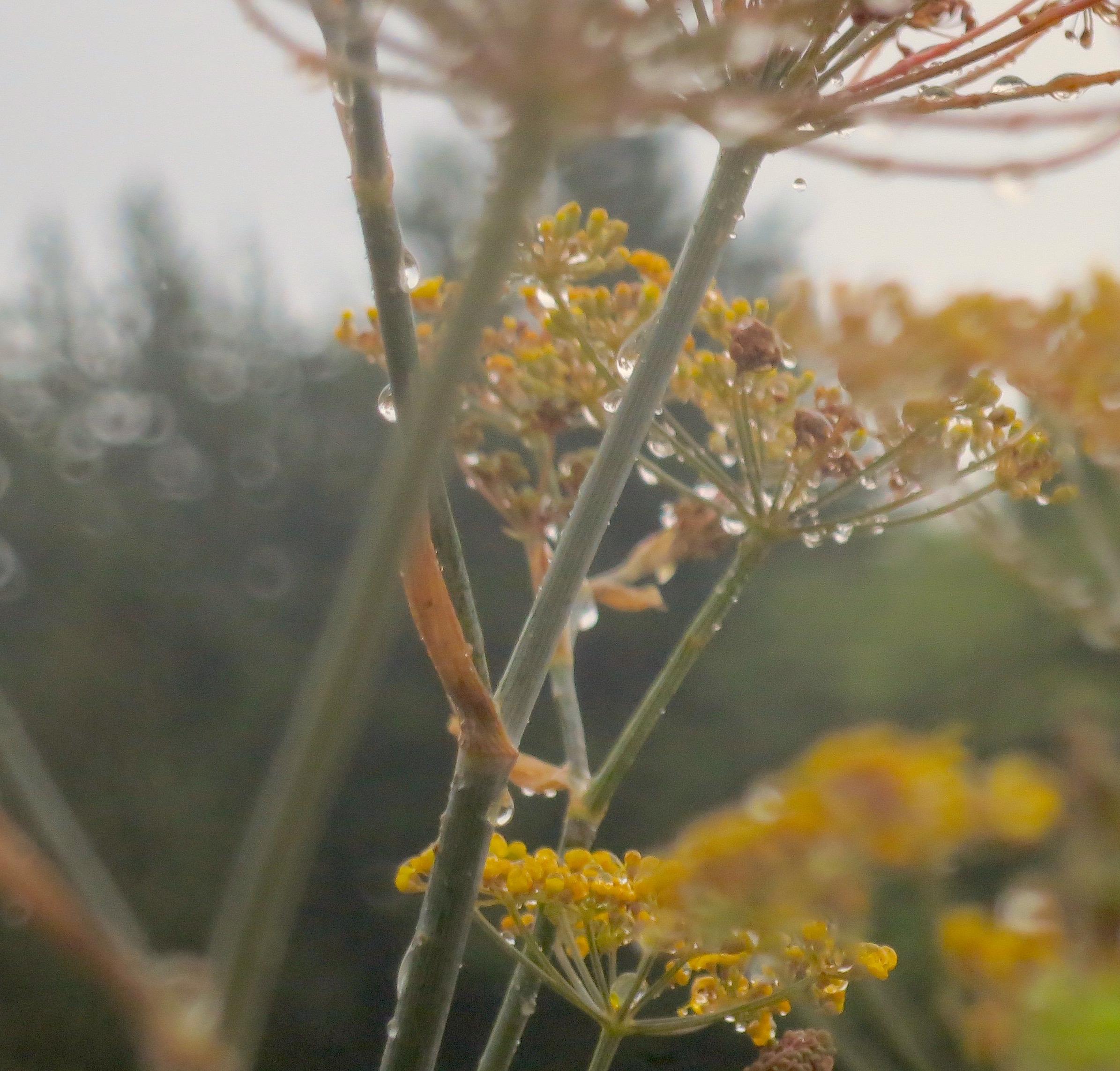 herbgardenrain