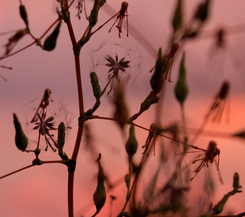 sunset8101513
