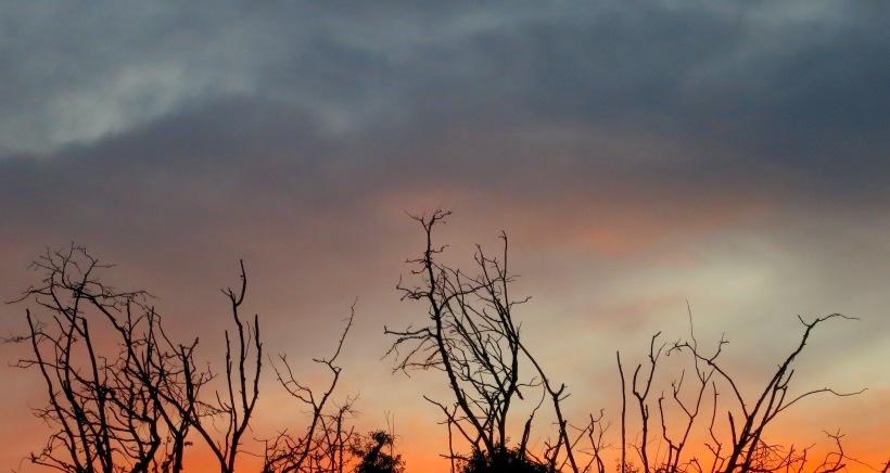 sunset810154