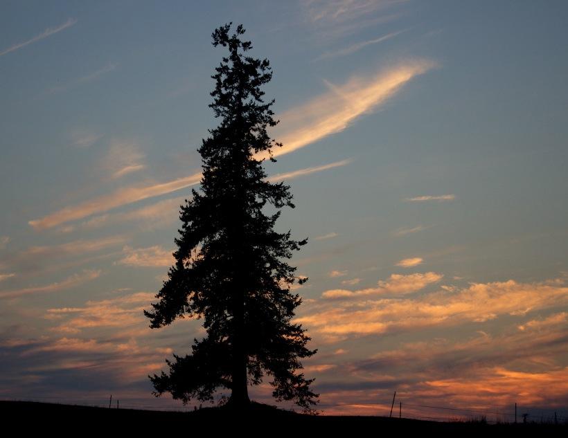 sunset813152