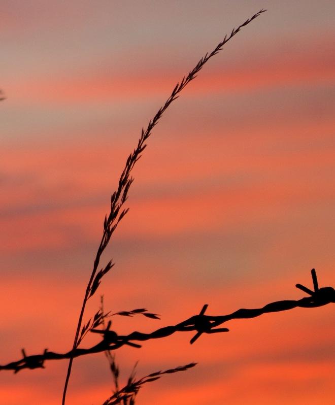 sunsetgrass810151
