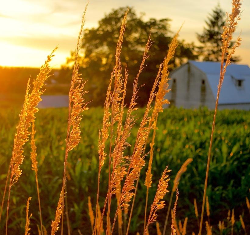 sunsetgrasses71615