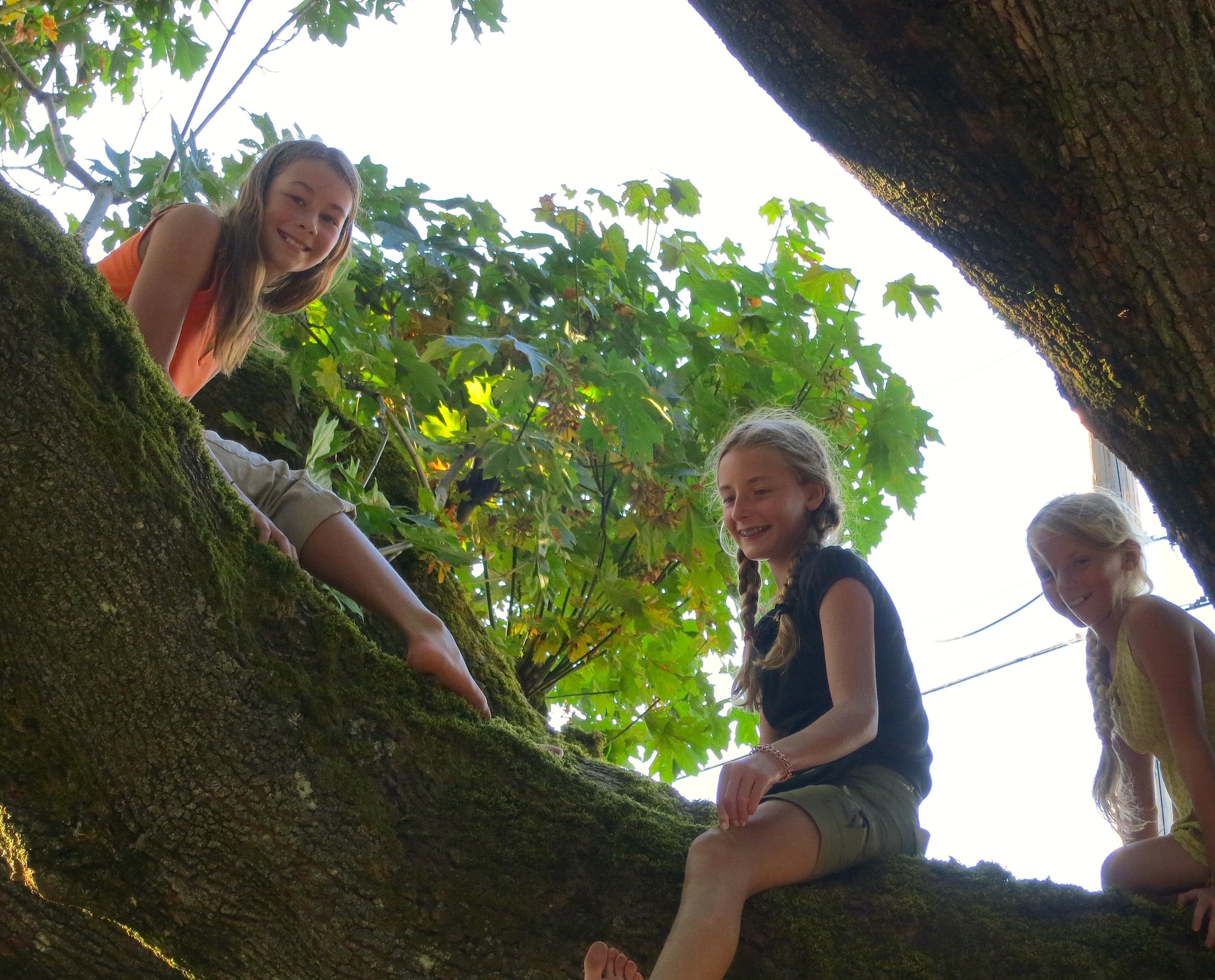 treeclimbers