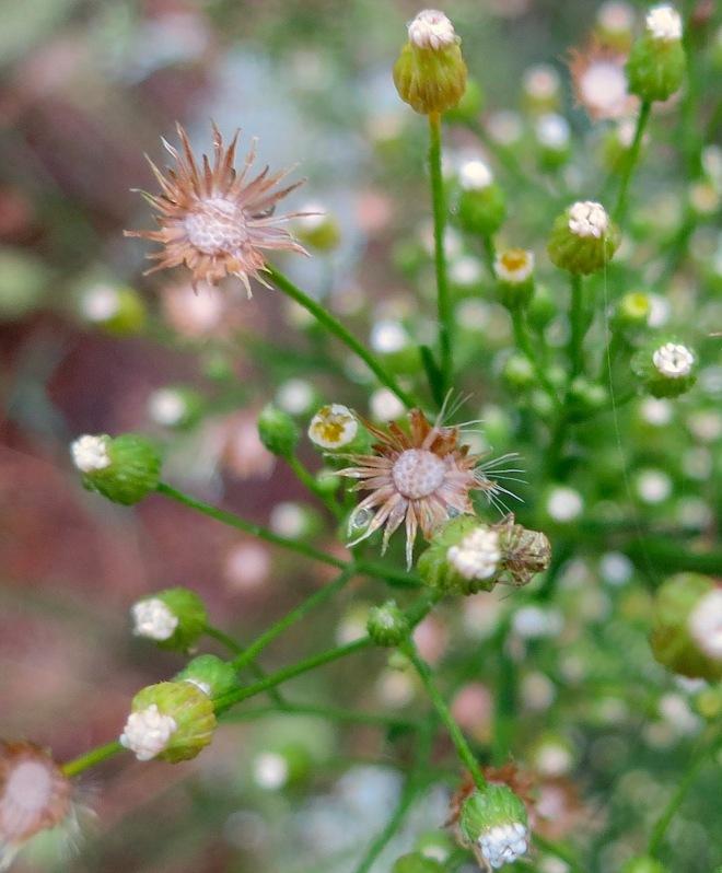 weedgrasshopperrain