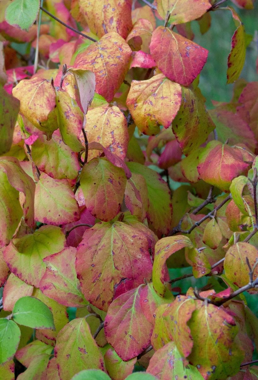 leavesbarbs