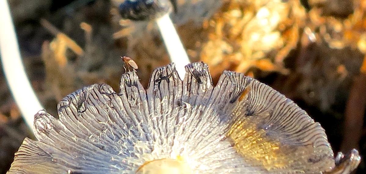 mushroompile1