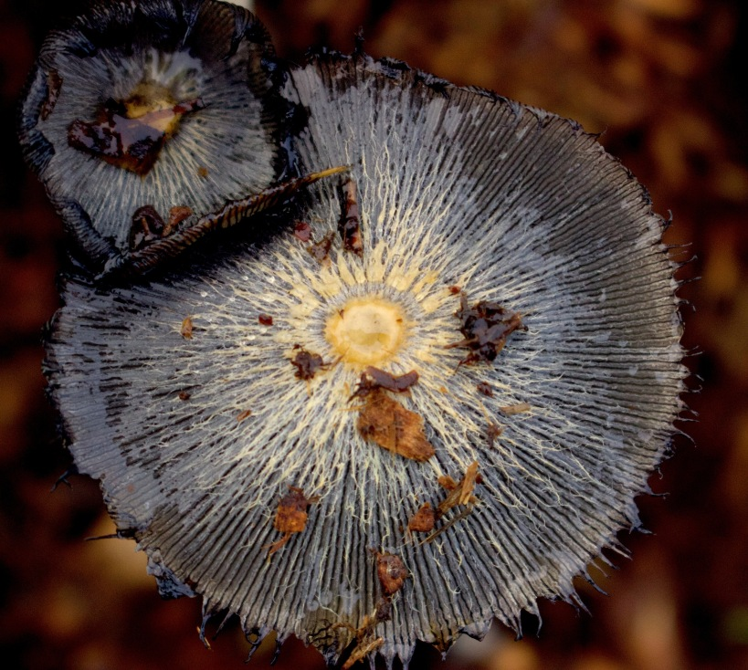mushroompile10