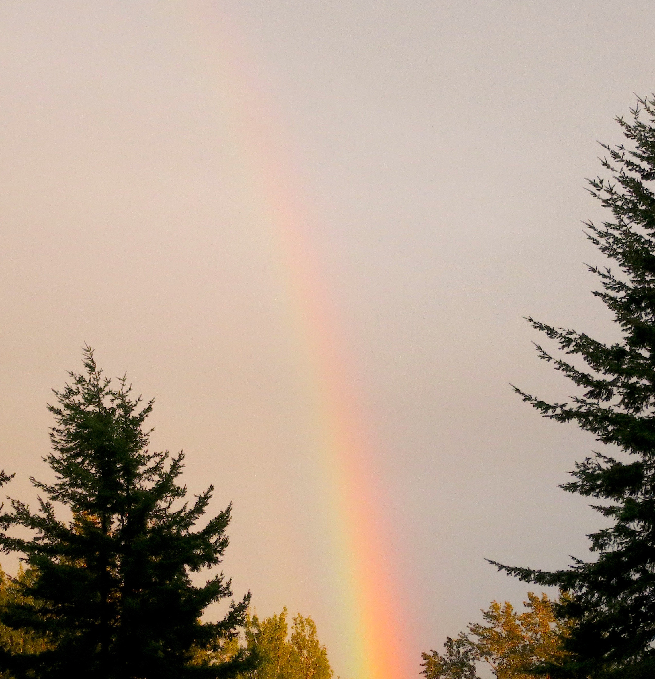 rainbow92015