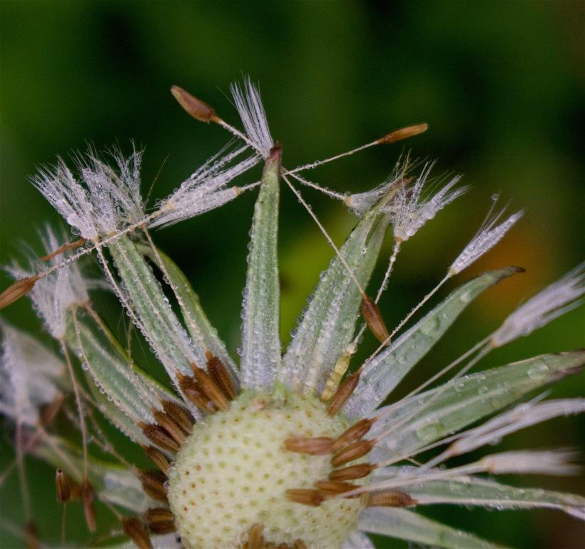 seedsloose
