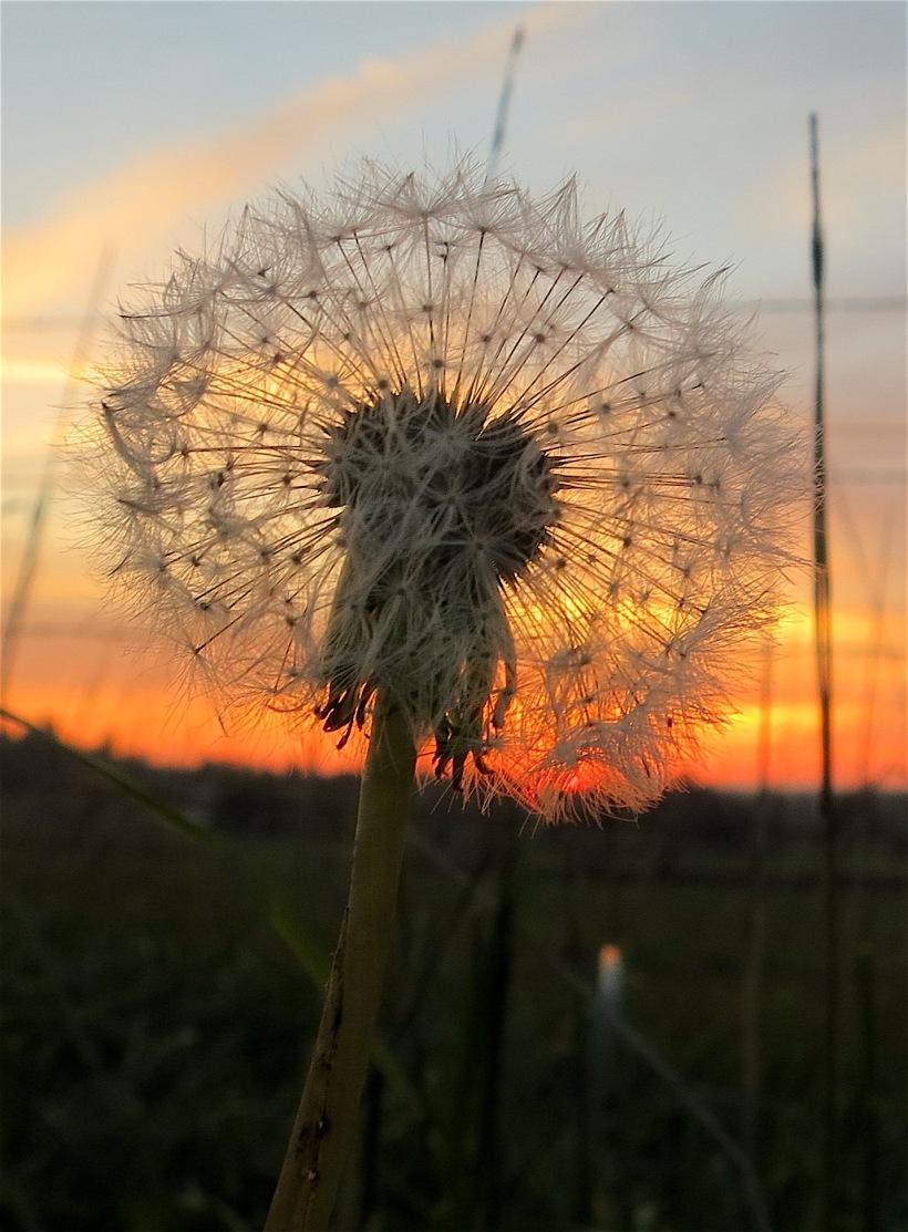 sunset1022151