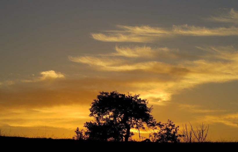sunset910151
