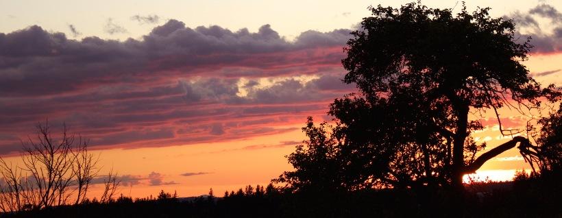 sunset95153
