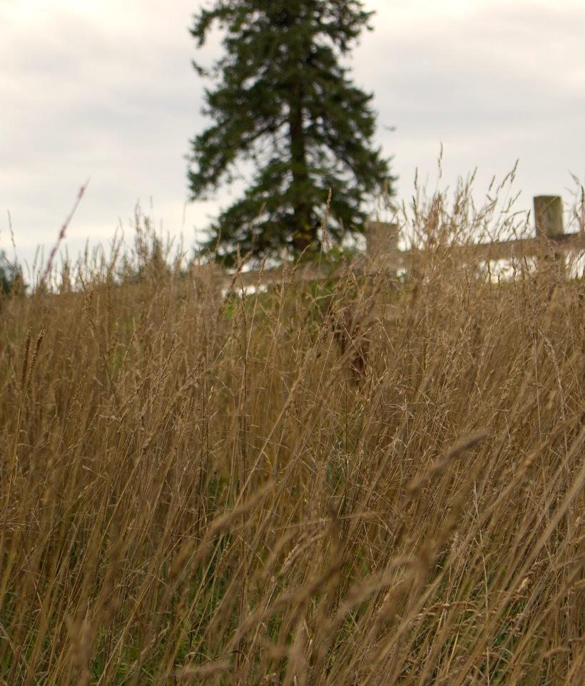 grassuphill
