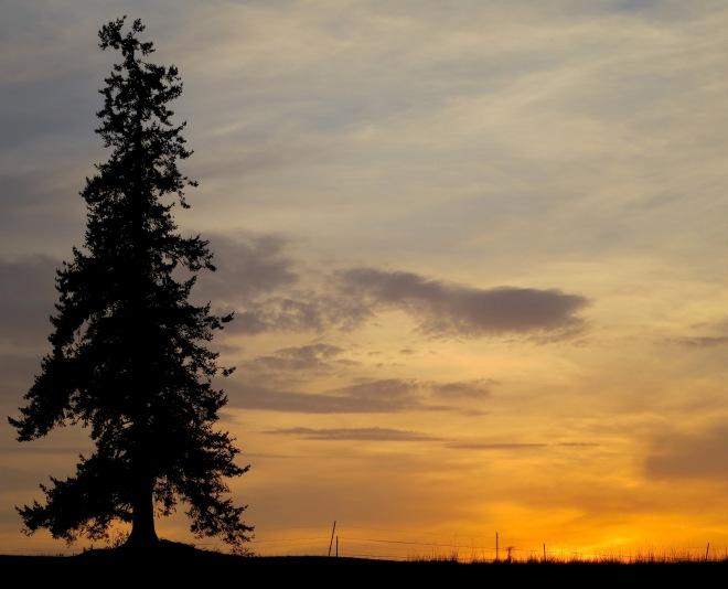 sunset810158