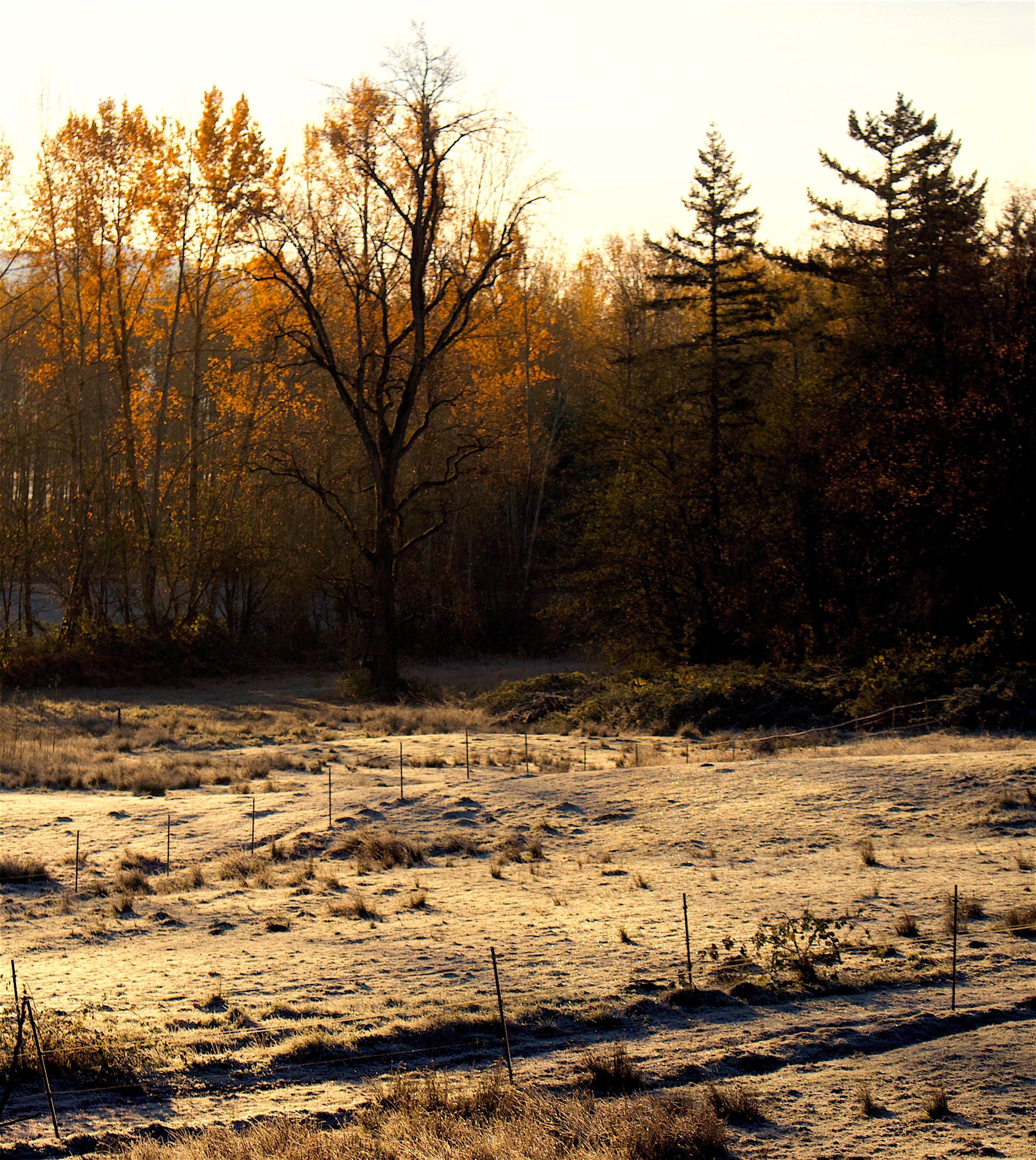 morningfrost112115