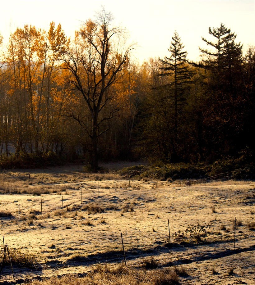 morningfrost112115