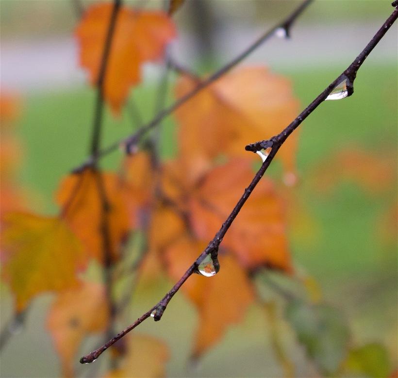 raindrops111415