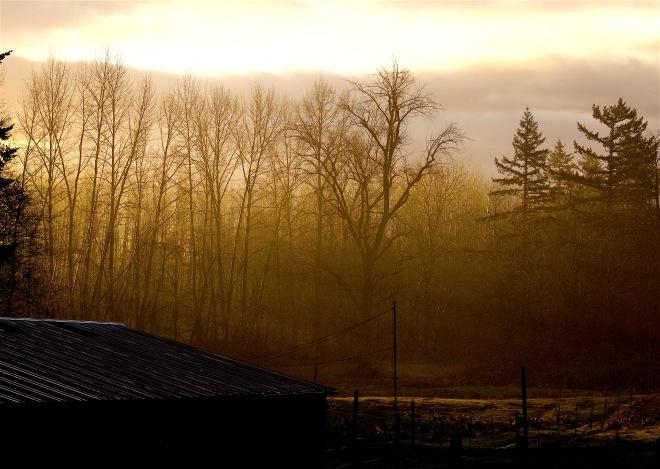 morningrain12