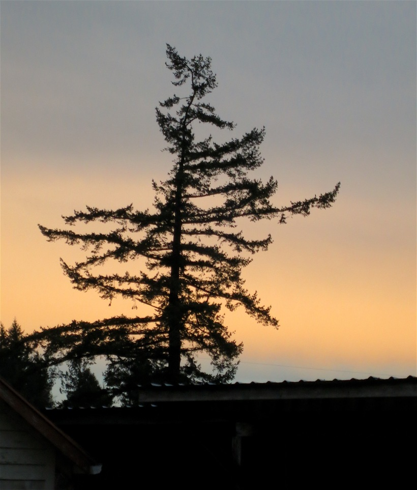 evening13162