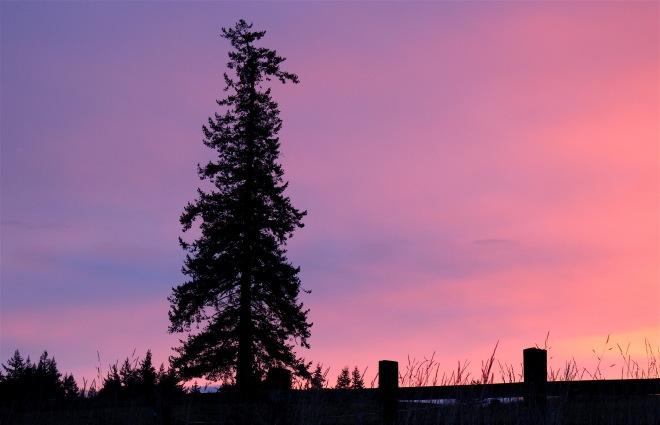 sunset15161