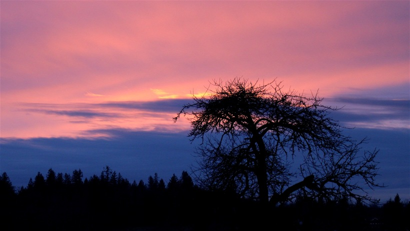 sunset15163