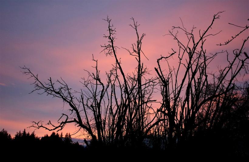 sunset15165