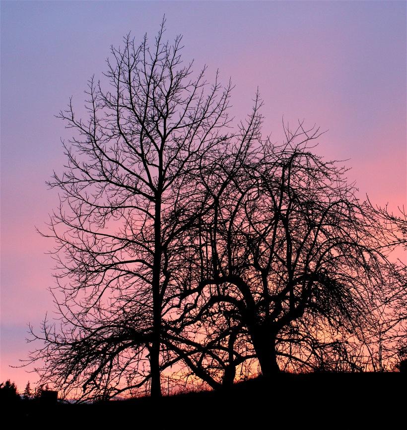 sunset15166