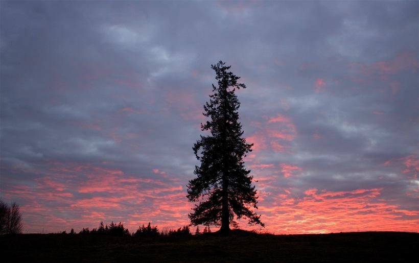 sunset17163