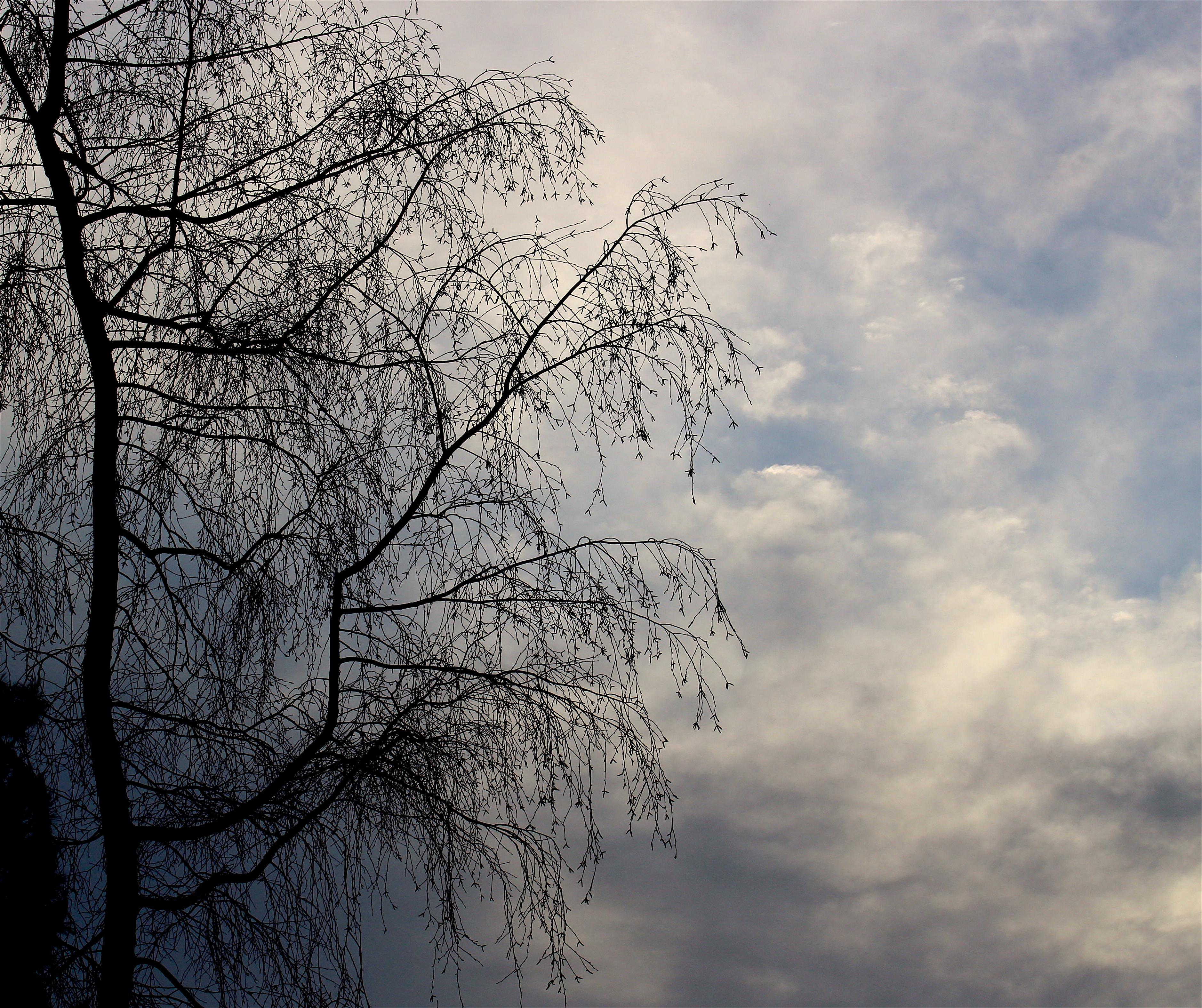 birchmorning