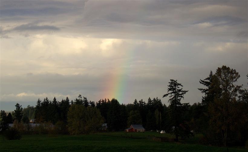 rainbowfarm2