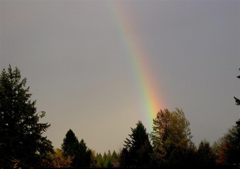 rainbowfarm3