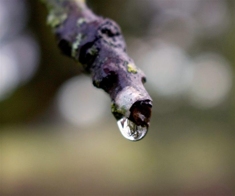 raindrop11816
