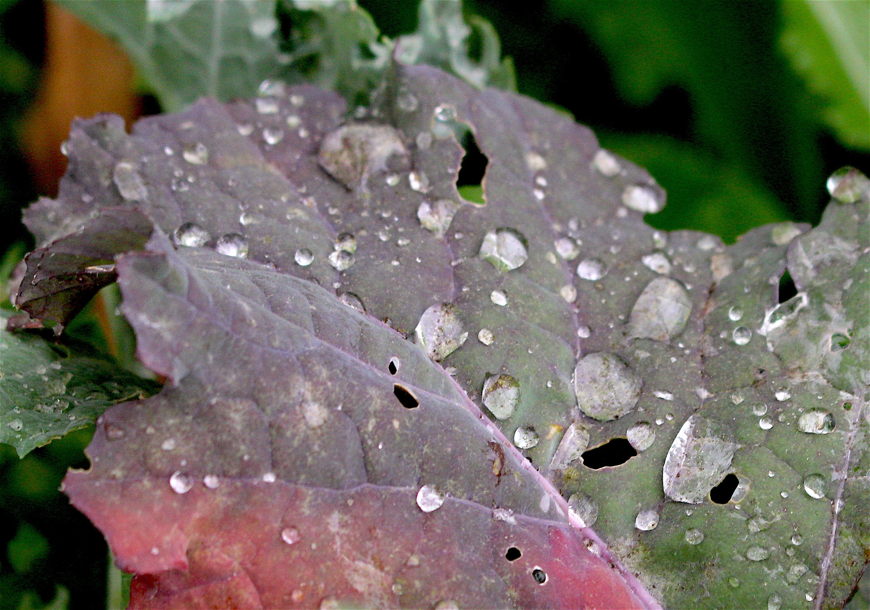 rainykale2