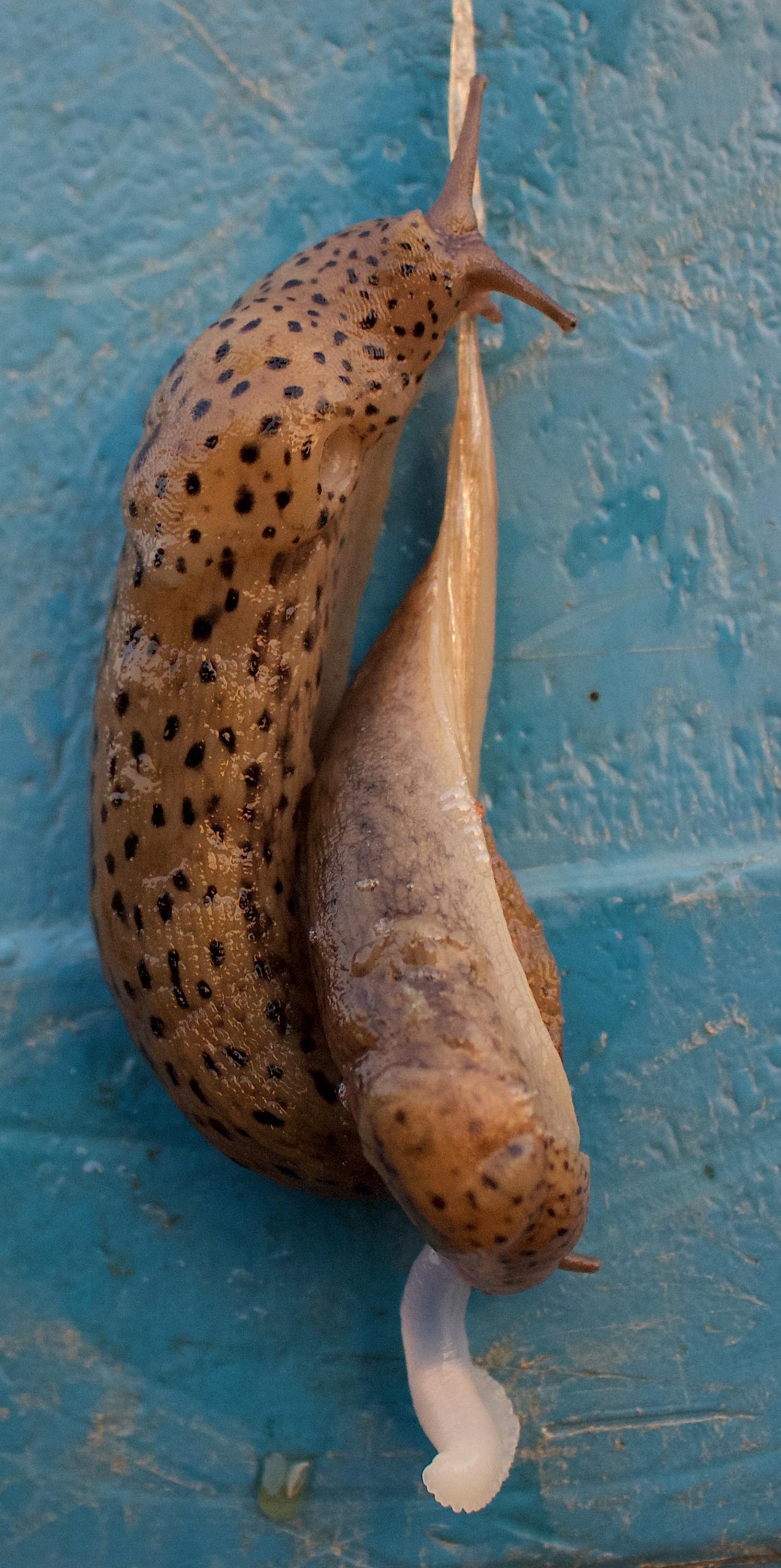 slugcanoodle