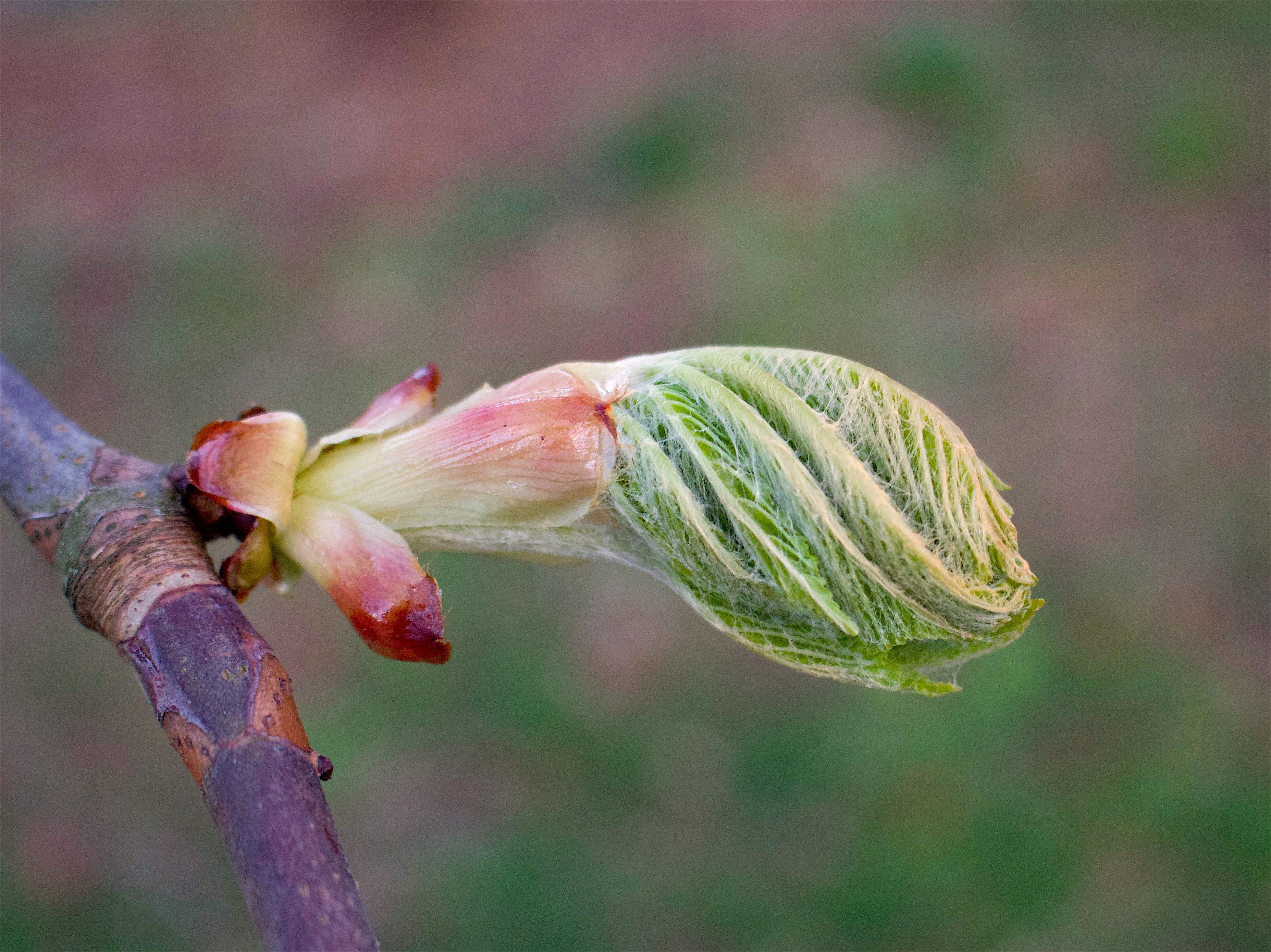 chestnutspring6